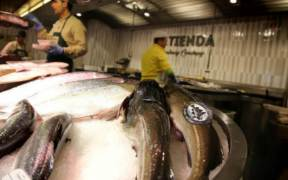STRONG START FOR THE NORWEGIAN SEAFOOD