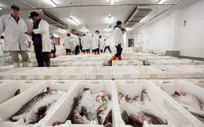 DROPPING PRICES PUT UK CATCHING