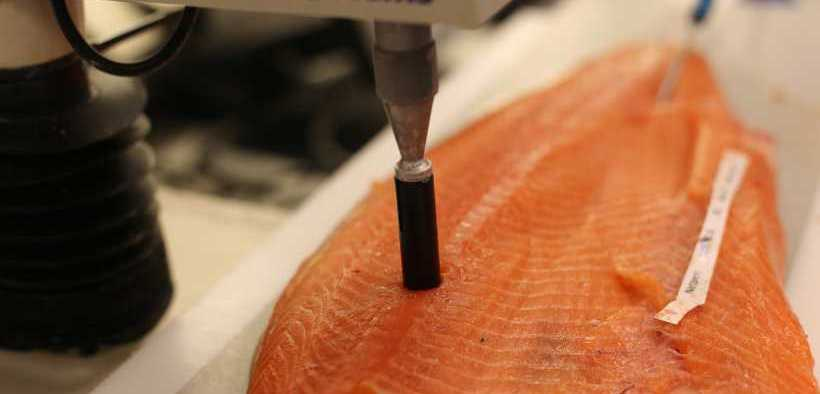 KRILL MEAL IMPROVES SALMON HEALTH