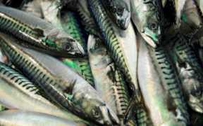 NORWEGIAN SEAFOOD EXPORTS FALL