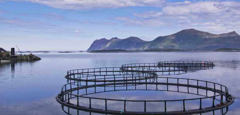 GLOBAL SALMON INITIATIVE STRENGTHENS