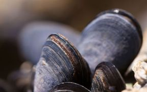 Shellfish Toxicity Warning Advice Remains in Place