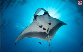 fos-launches-sustainable-manta-ray-watching-standard