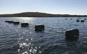 nafc-charts-a-course-for-shellfish-producers