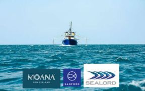 nz-seafood-companies-support-cameras-on-fishing-vessels