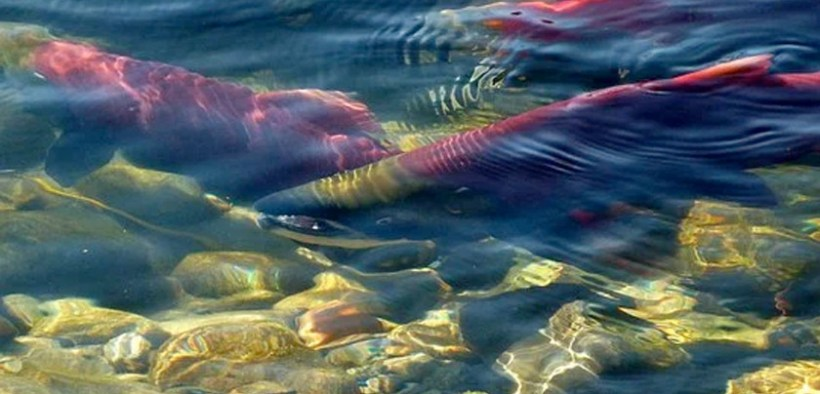 Canadian Government consults on aquaculture sites