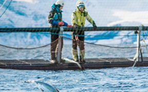 MSD Animal Health launches research bursary for aquaculture