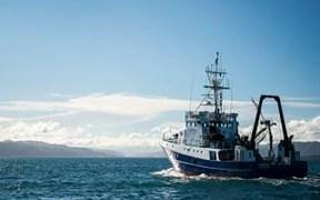 New Zealand snapper science survey