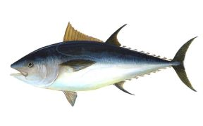 newest-issf-participating-tuna-company-report