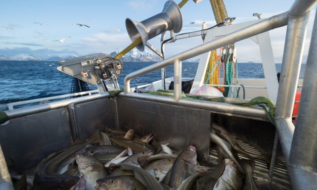 Norwegian Seafood Council signs William Murray as new PR partner in the UK
