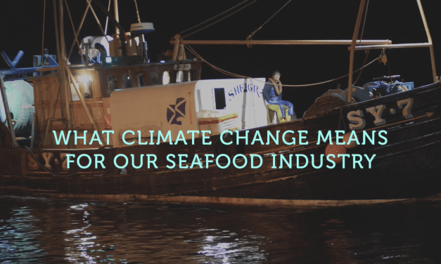 Seafish launches campaign on climate change impacts for seafood