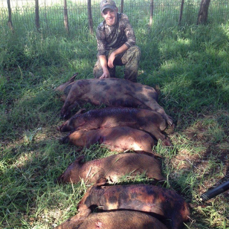 slaying down hogs