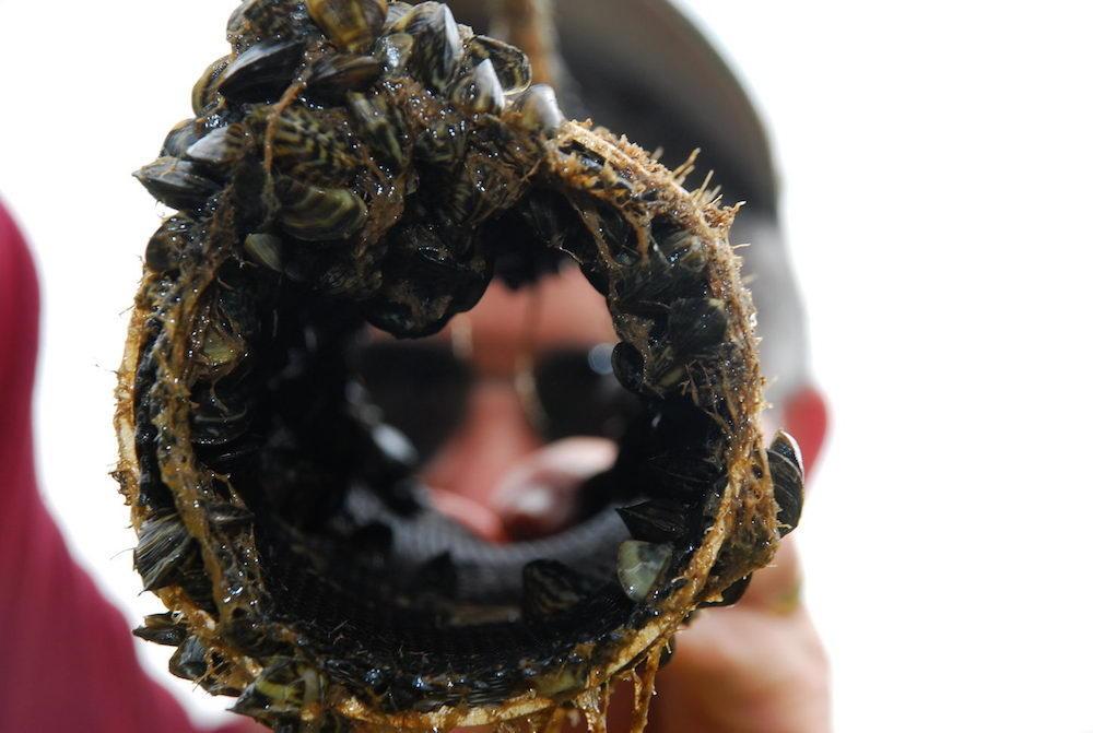 New Zebra Mussel Rules Take Effect