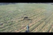 Helicopter Hog Eradication in North Texas [video]