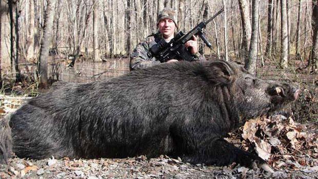 hunter-hog