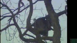 Turkey Hunting TPWD 2013