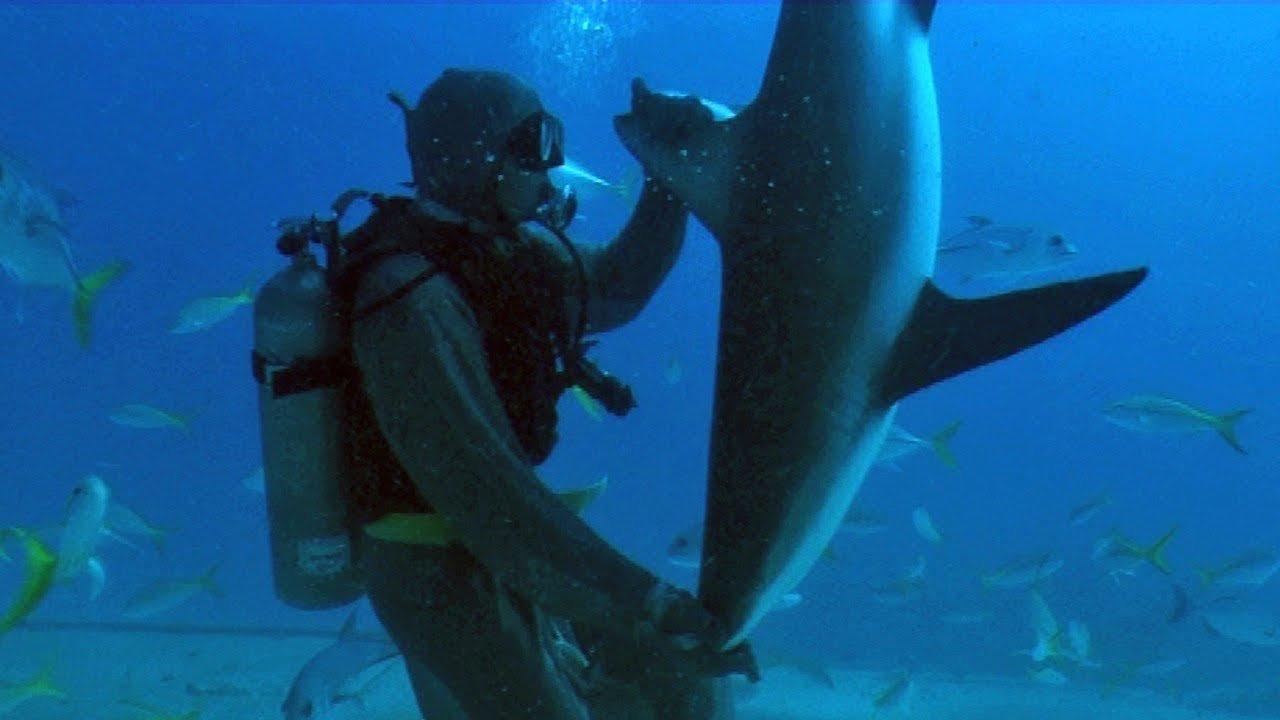 Watch What Happens When Scuba Divers Touch a Shark's Nose