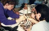 Me taking a jaguar to the dentist? (Photos)