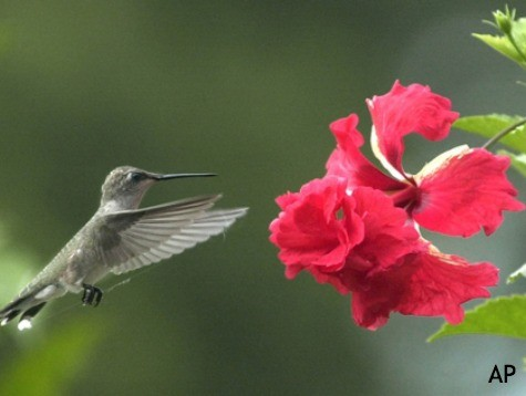 Texas Man Accused of Smuggling Dead Hummingbirds