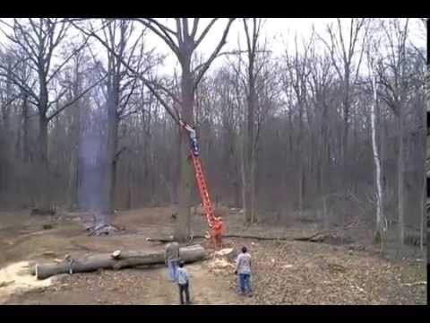'Everybody Good?': That's the Question He Asked Right Before He Cut Down Giant Branch. The Next Question Asked Was '911 or Not?' (Video: Strong Language)
