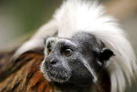 Europe-wide hunt after rare monkeys stolen from British zoo