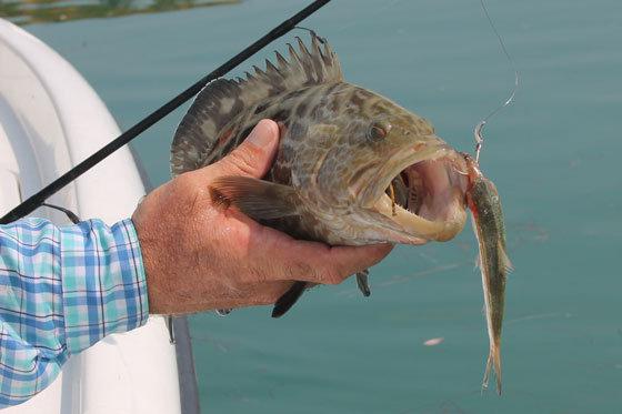 live bait