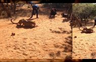 TF&G Reader Story: How Fast is a Cheetah? Check Out This Video
