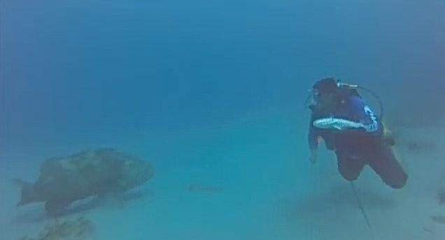 goliath-grouper-2-