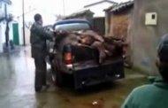 Post Hog Hunting Fail