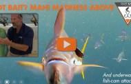 THEY ATE THE FISH-CAM - Got Bait? III is Mahi-Mahi Mayhem