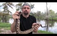Snakes, shrews and sloths! (video)