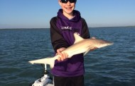 Shark Fishing From Your Boat