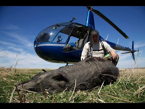 hog hunting from helicopter in texas with Watch Helicopter Hog Hunting With A Bow on 39979056 additionally Wild Hog Problem as well Helicopter Hog Hunt Slow Mo Kill Shots Video moreover Feral Hogs Root Familys Farm moreover Hipster t shirts 235383526990469597.