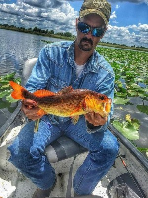 635784426002087453-orange-bass