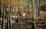 Prospects Remain Excellent for Deer Season