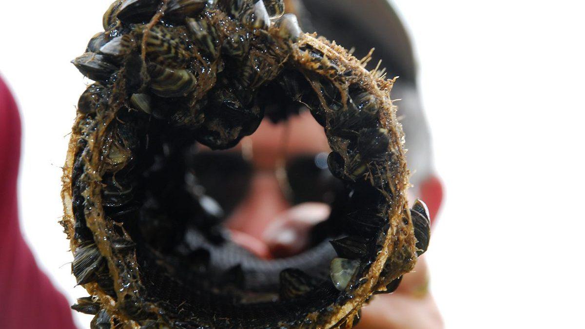 Zebra Mussels - Texas Update