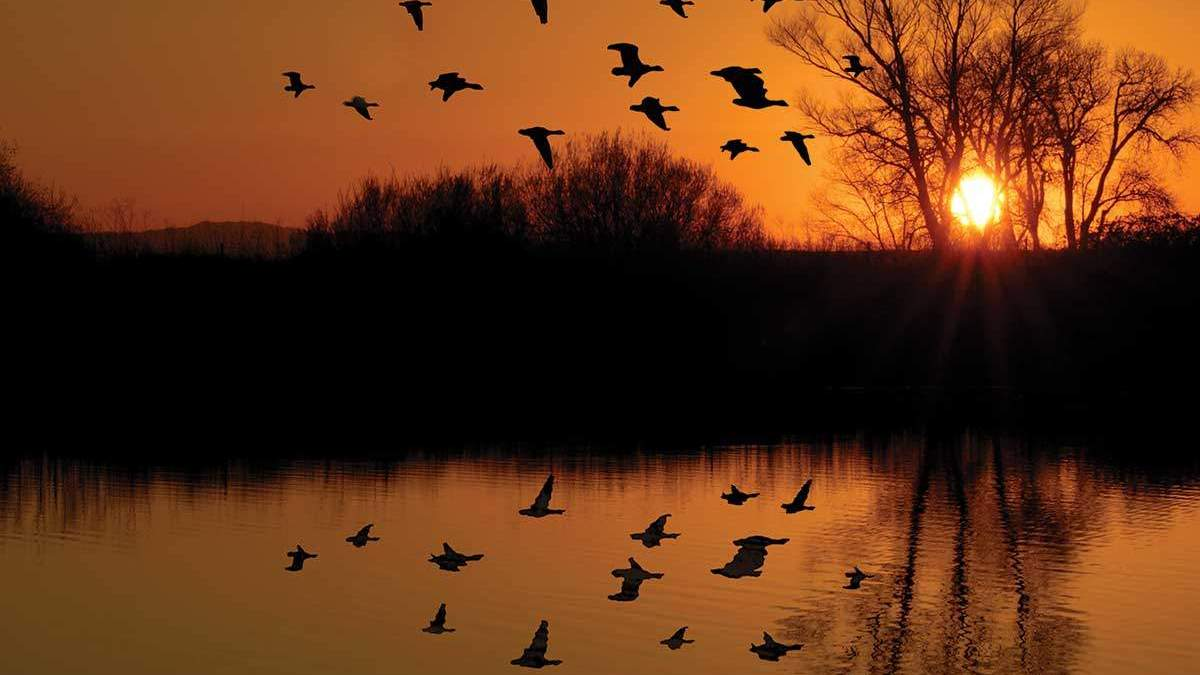 why we love waterfowl