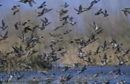 Waterfowl Hunting Season Gets Underway