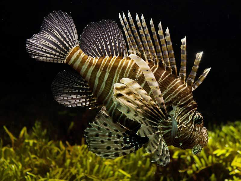The 2nd Lone Star Lionfish Symposium Hosts Public Forum