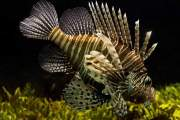 The 2nd Lone Star Lionfish Symposium Hosts Public Forum