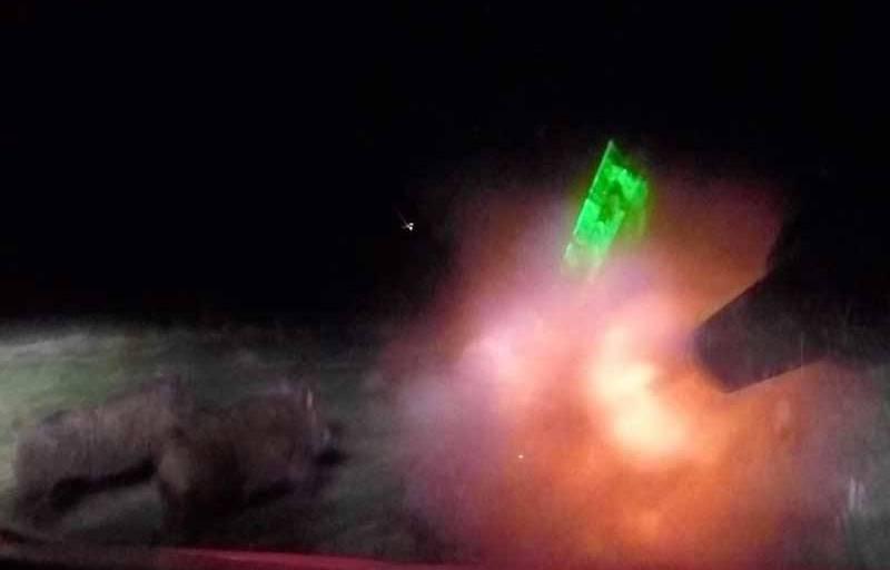 Insane Hog Eradication Using an ATV and Shotgun