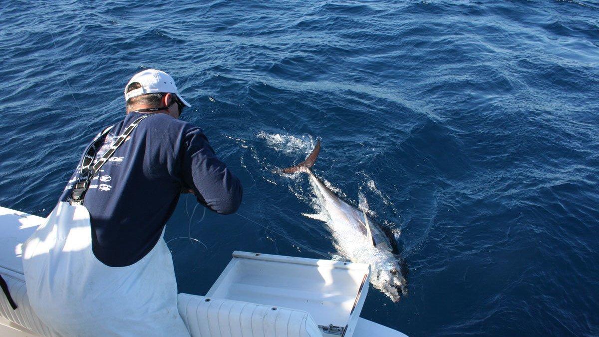 leadering tuna fish