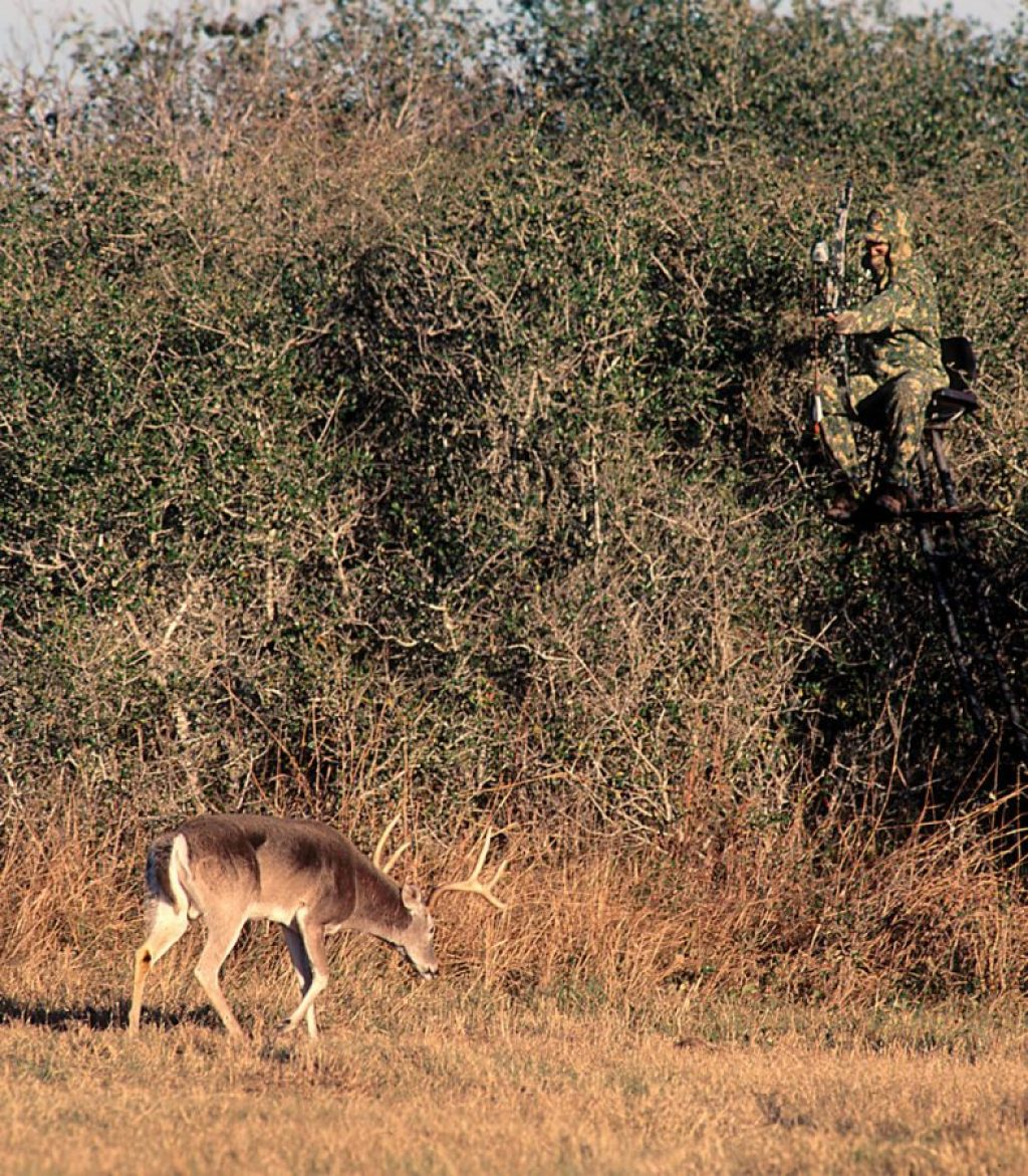 Bow hunter aiming at 8-point buck from elevated stand.
