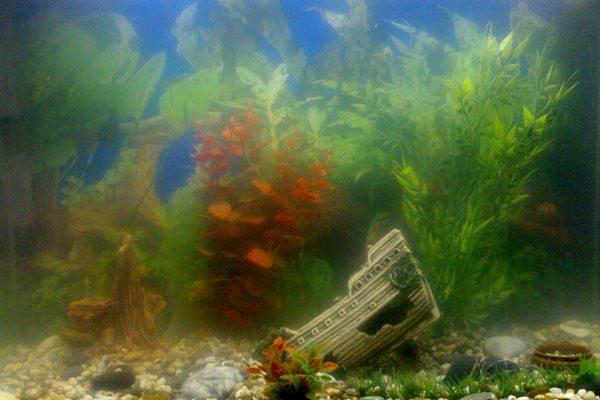 água lamacenta no aquário