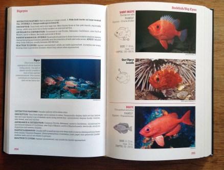 Reef Fish Identification Florida Caribbean Bahamas spread