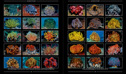 Page Spread Colours of the Reef 01