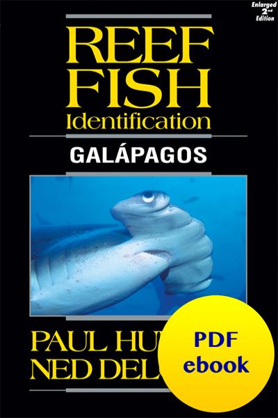 Reef Fish Identification Galapagos