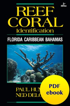 Reef Coral Identification - Florida Caribbean Bahamas PDF ebook