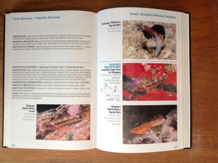 Reef Fish Identification Galapagos page spread 02