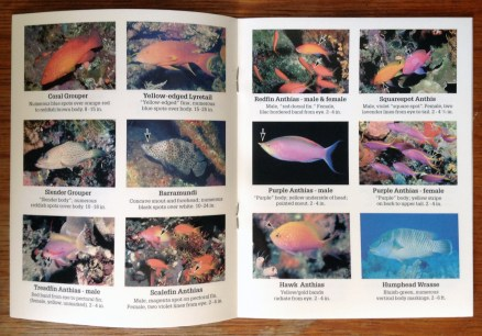 Tropical Pacific waterproof mini book 2 page spread.